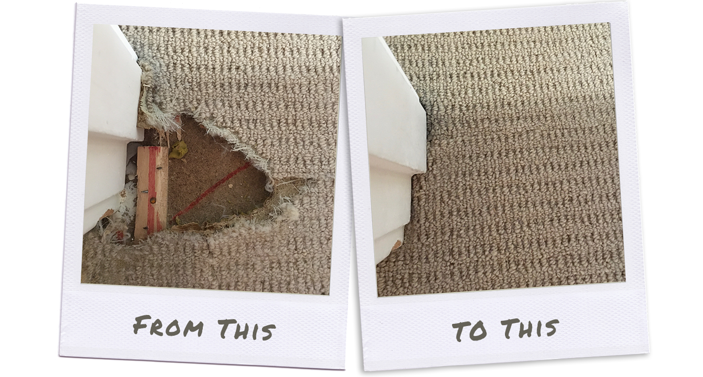 chewed carpet repairs